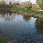 Mile End Park Canal